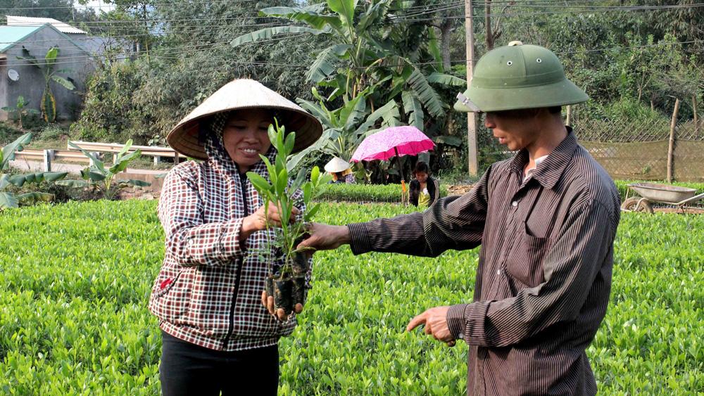 Phấn đấu trồng mới 3 nghìn ha rừng