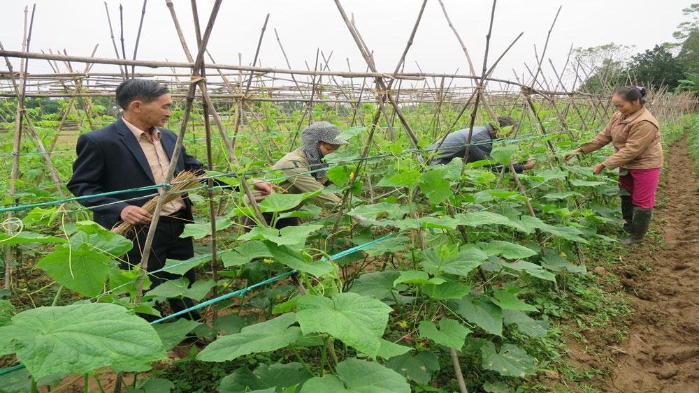 Lạng Giang gieo trồng hơn 9 nghìn ha cây trồng vụ chiêm xuân
