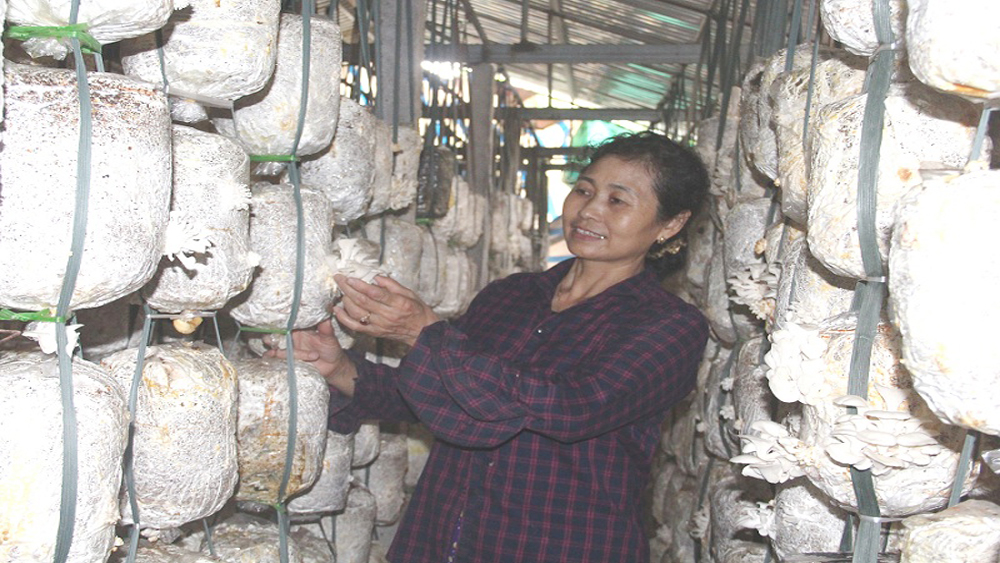 Hiệp Hòa: Hỗ trợ 300 triệu đồng xây dựng hai nhà lạnh sản xuất nấm