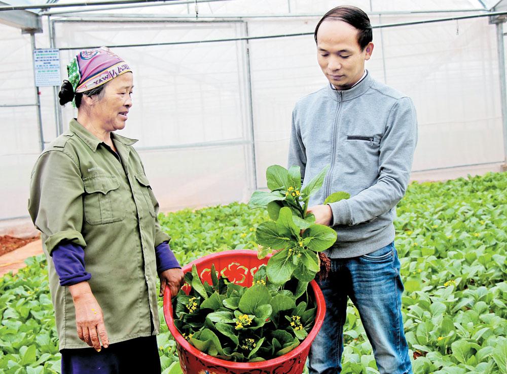 Anh Vũ Tiến Trường hướng dẫn người lao động cách thu hái sản phẩm.