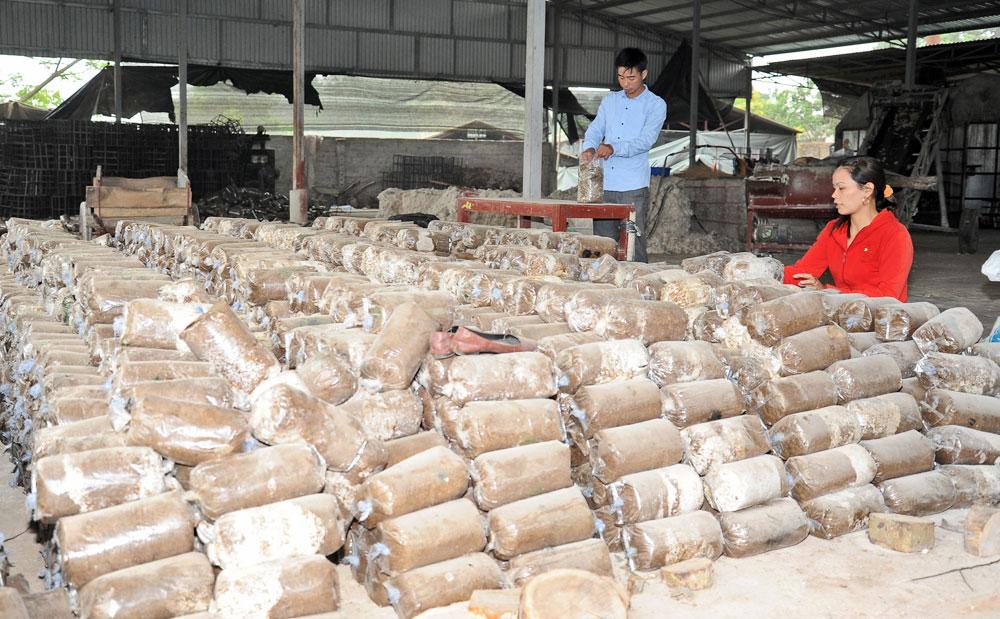 Nấm được trồng từ nguồn nguyên liệu bảo đảm các điều kiện an toàn.