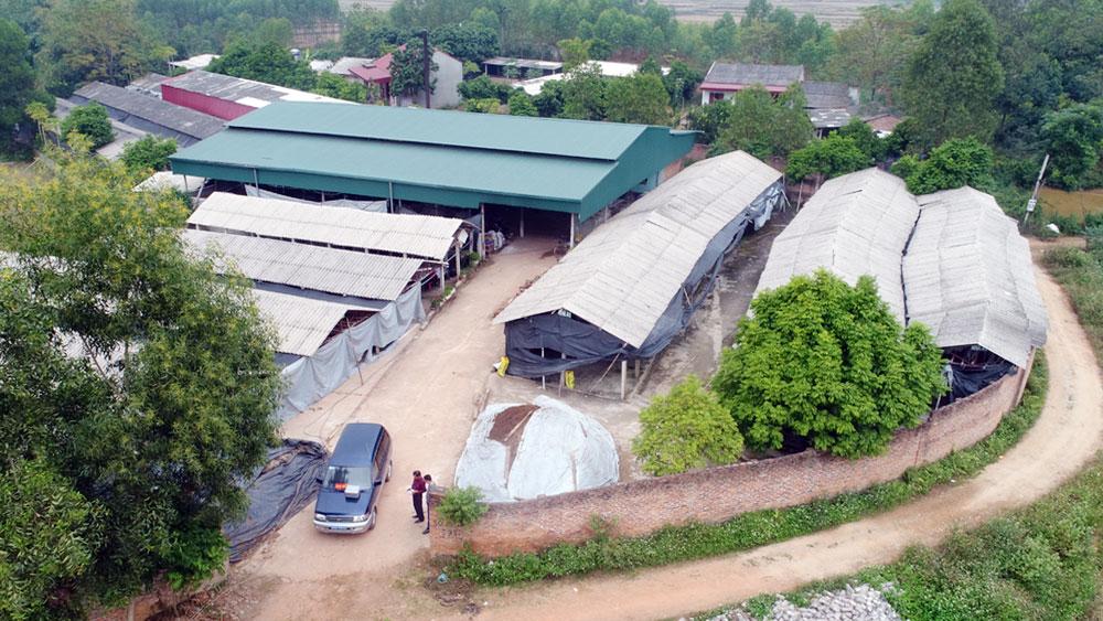 Hệ thống nhà xưởng diện tích hơn 7.000m2, thu hoạch hơn 100 tấn sản phẩm/năm.
