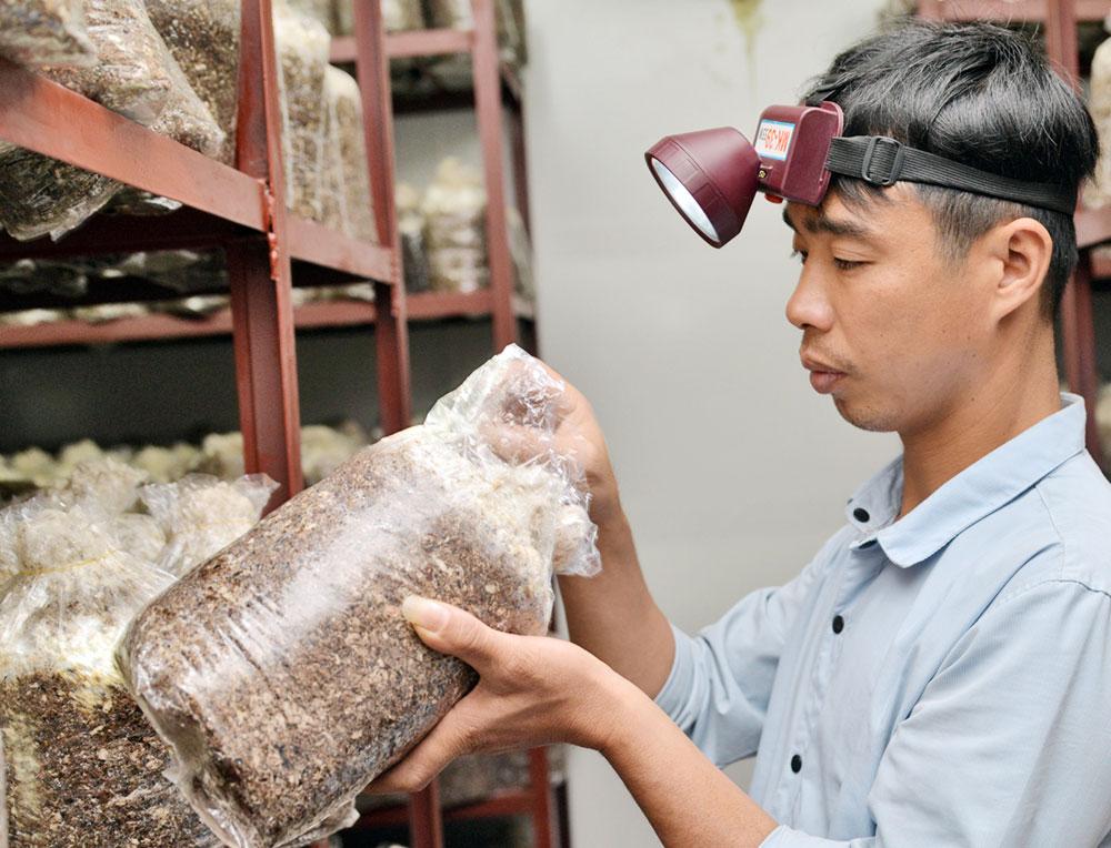 Giám đốc Hợp tác xã Đồng Xuân Hiệp (SN 1981) trực tiếp kiểm tra chất lượng cấy giống theo quy trình công nghệ cao.
