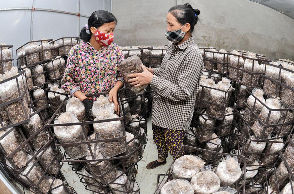 Xã viên Hợp tác xã triển khai các công đoạn trồng nấm.