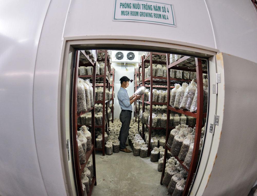 Một trong 4 phòng nuôi nấm ứng dụng công nghệ cao vừa được đầu tư.