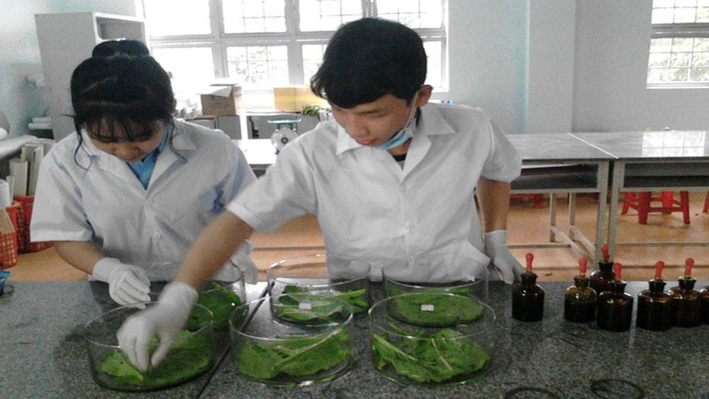 Học sinh lớp 12, chế ra, phân hữu cơ, trồng rau sạch