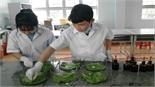 Học sinh lớp 12 chế ra phân hữu cơ để trồng rau sạch