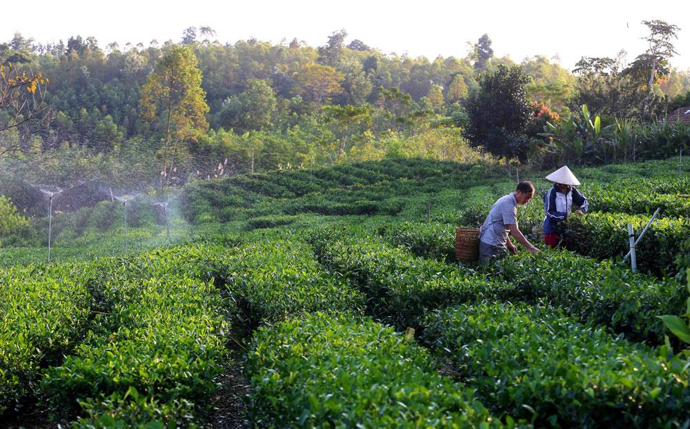 Liên kết, hợp tác phát triển kinh tế tập thể: Hướng đi mới cho nông dân