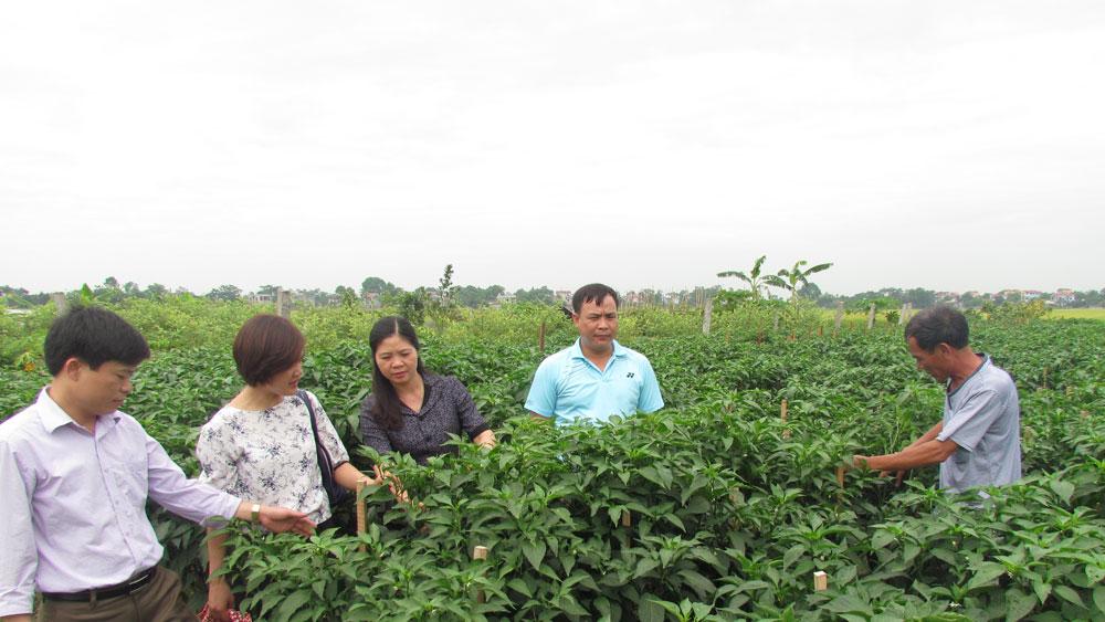 Liên kết, hợp tác, phát triển kinh tế tập thể, hướng đi mới, nông dân