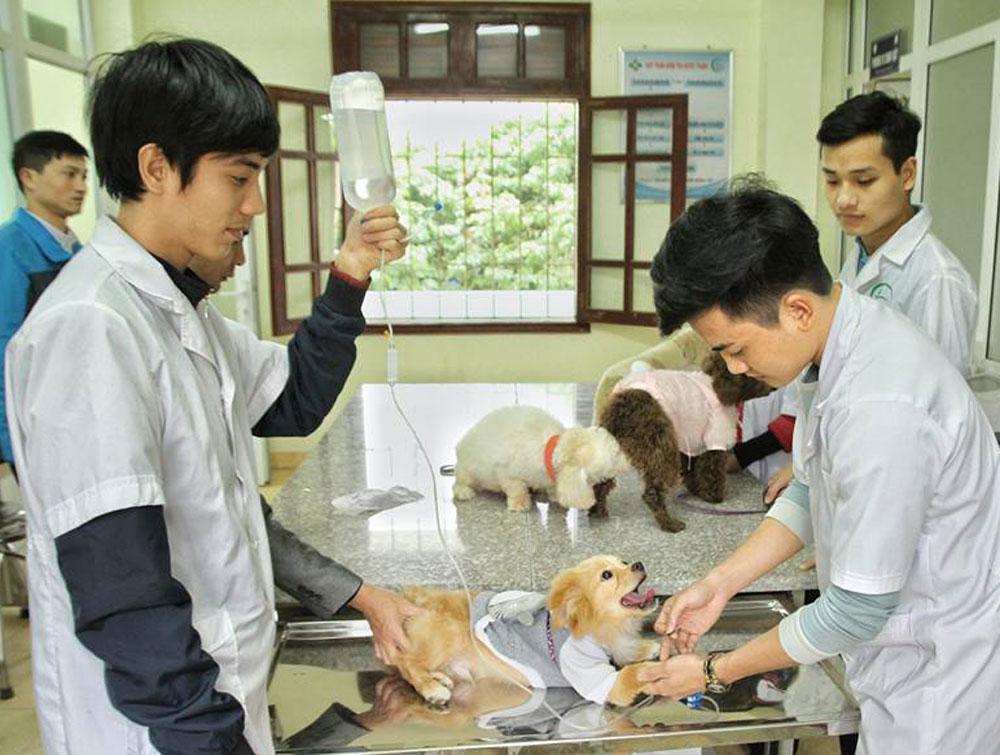 Nhóm sinh viên Khoa Chăn nuôi - Thú y, Trường Đại học Nông - Lâm Bắc Giang khởi nghiệp với mạng lưới khám, điều trị bệnh cho chó cảnh.