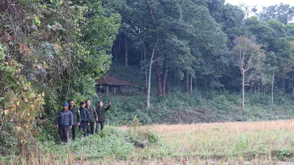 Thu hồi giấy chứng nhận sử dụng đất lâm nghiệp nếu chủ rừng vi phạm chặt phá rừng