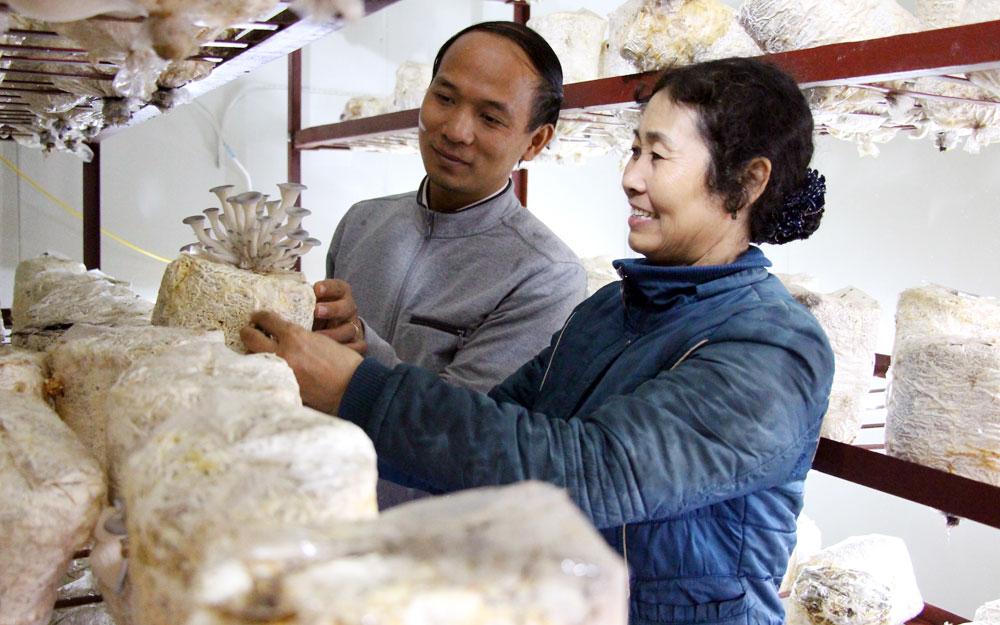 Bắc Giang, Hiệp Hòa,  Hỗ trợ,  mô hình,  trồng nấm,  công nghệ cao