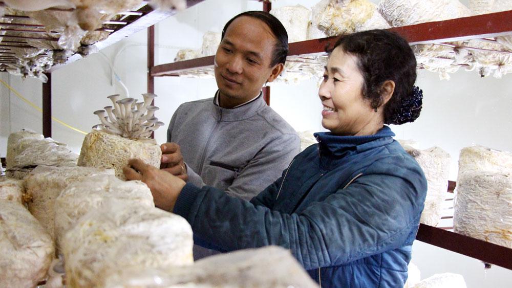 Hiệp Hòa: Hỗ trợ mô hình trồng nấm công nghệ cao