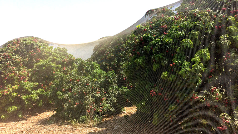 Khảo sát nông nghiệp công nghệ cao ở Israel