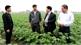Mượn 6 ha ruộng trồng khoai tây chế biến