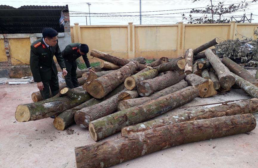 Công an huyện Lục Nam phát hiện, bắt giữ 2 vụ phá rừng trái phép