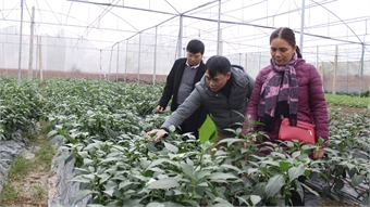 Viet Yen focuses on hi-tech agricultural development