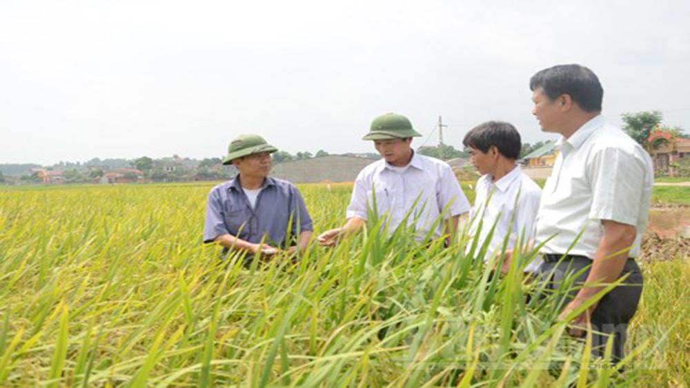 700 triệu đồng hỗ trợ giá giống lúa cho nông dân