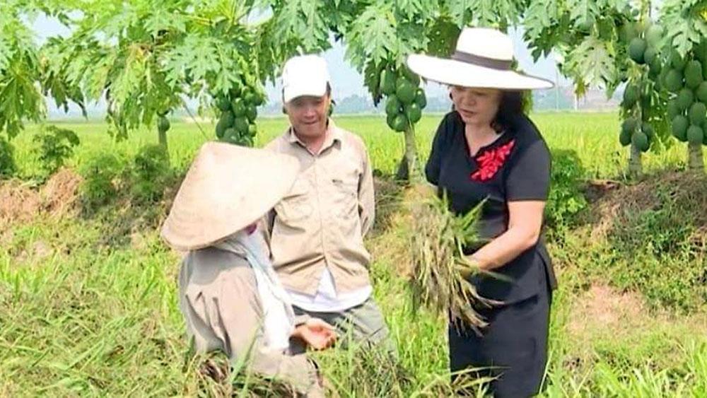 """""""Hạt ngọc"""" đen từ lúa tím"""