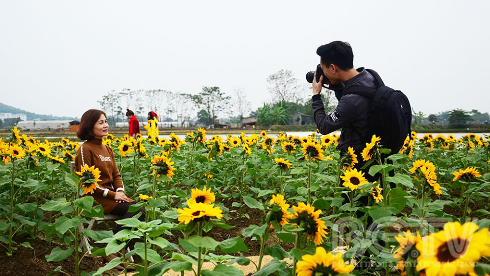 Sunflower field draws visitors