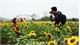 Sunflower field draws visitors