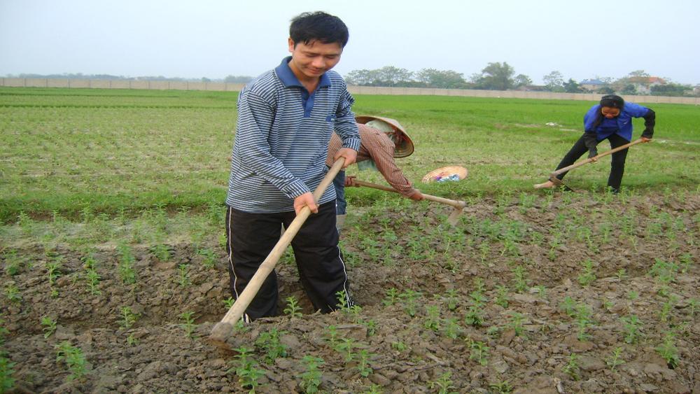 Tân Yên phấn đấu trồng hơn 200 ha rau quả chế biến