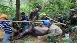 1.800 gia súc đã chết vì rét đậm, rét hại