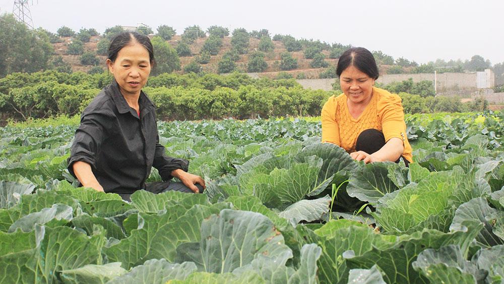 Phụ nữ Đồng Lạc: Tạo thói quen canh tác rau an toàn