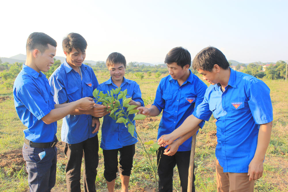 Bac Giang province, youth model, start-up models, successful year, start-up ideas, local young people, new techniques, technological advances, automatic drip irrigation system