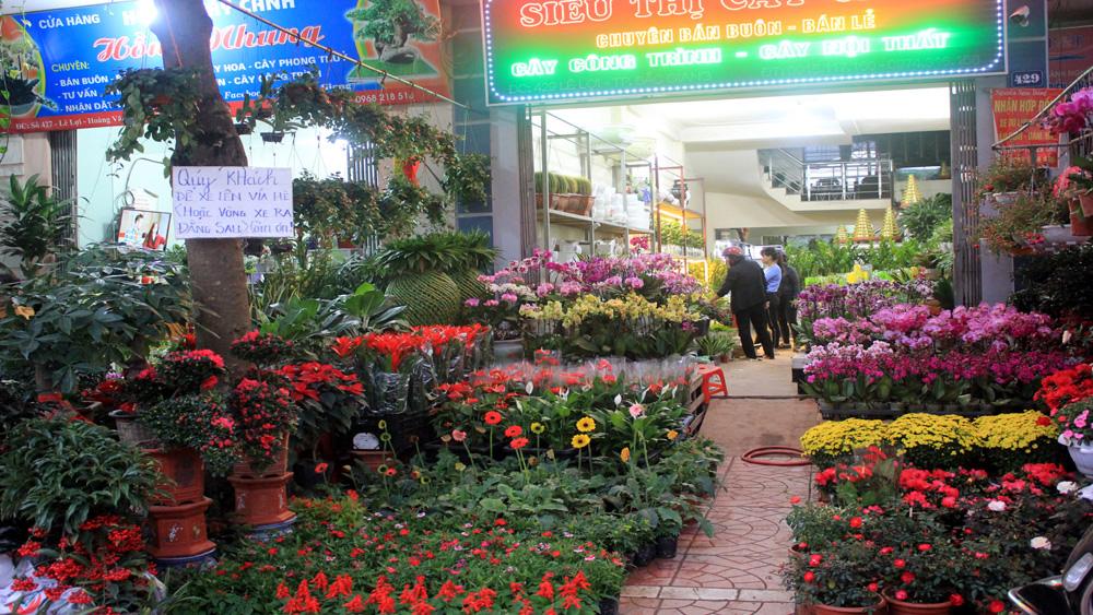 hoa, cây cảnh, Tết