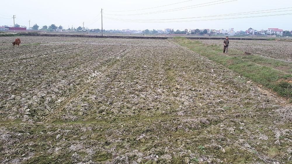 Xã Bích Sơn (Việt Yên): Xem xét giao đủ đất cho hộ dân sau dồn điền đổi thửa
