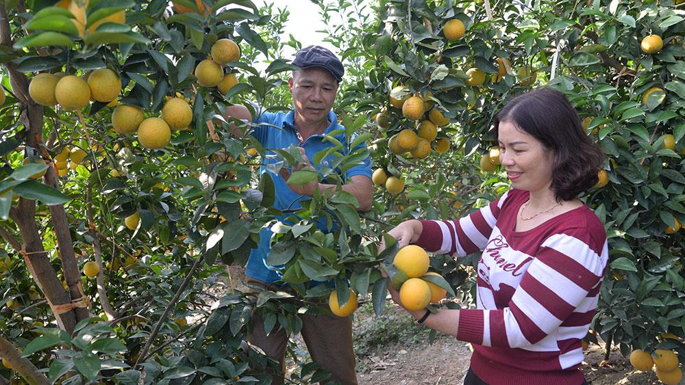 Đường đến giàu có, ngày hội trái cây, vải thiều, cam, bưởi