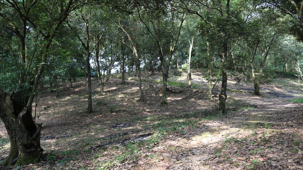 Tăng cường các biện pháp phòng, chống cháy rừng và khai thác rừng trái phép