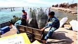 Vượt trùng khơi mang không khí Tết đến quần đảo Trường Sa