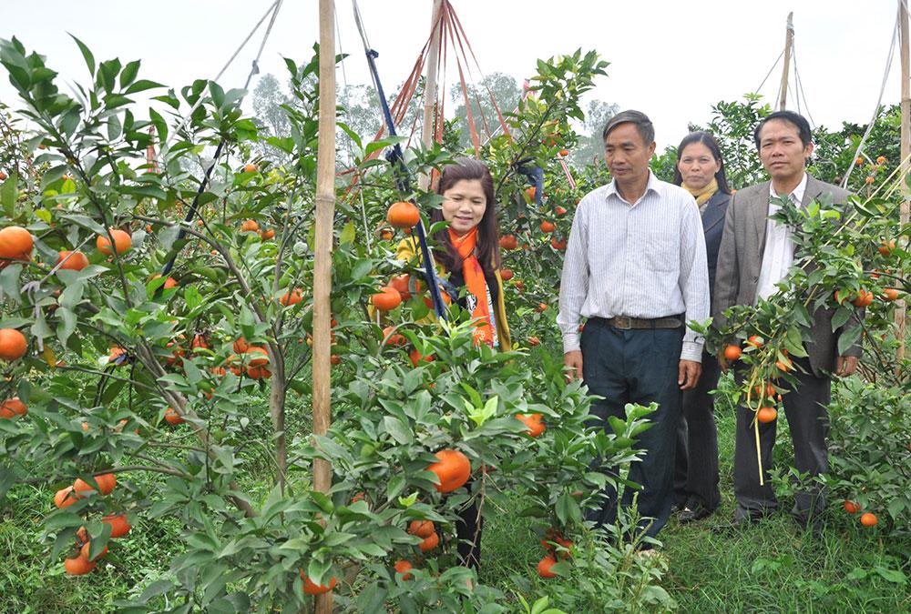 Mô hình nông nghiệp ứng dụng công nghệ cao phát huy hiệu quả