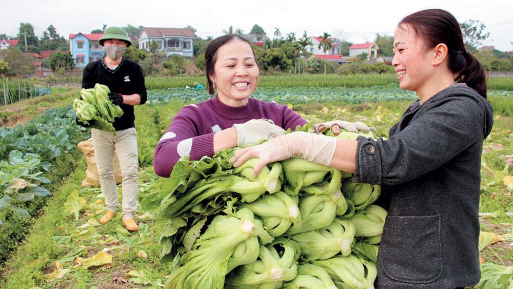 Bắc Giang: Bội thu từ cây vụ đông