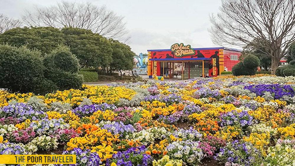 biển hoa, đẹp ngất ngây, Nhật Bản