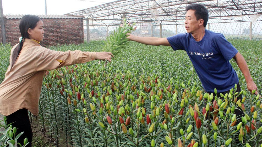 Nhà vườn lãi lớn,  nhờ trồng hoa ly, Việt Yên