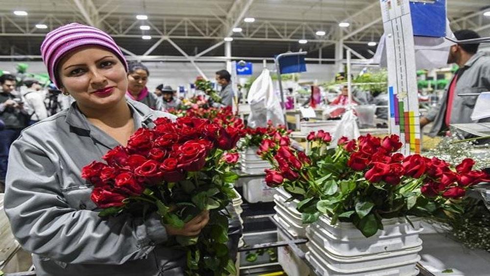 Không khí đón Valentine trên khắp thế giới