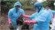 Bộ Y tế khuyến cáo nguy cơ về các virus cúm độc lực cao
