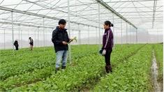 Xây dựng 26 mô hình nông nghiệp công nghệ cao