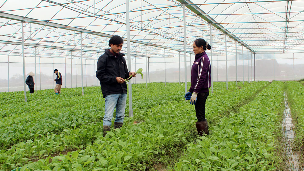 Bac Giang builds 26 hi-tech agriculture models