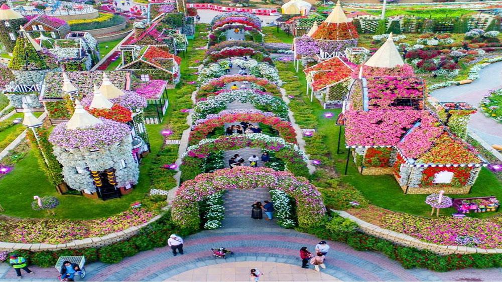 Thăm vườn hoa lớn nhất giữa sa mạc