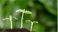 Hạt giống cho mùa sau
