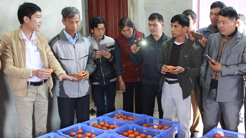 Bảo quản cam đường Canh bằng màng sinh học Chitosan