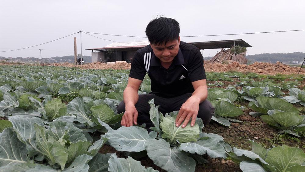 Hiệu quả bước đầu từ mô hình sản xuất rau an toàn tại xã Đồng Việt