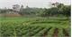 Phồn Xương xây dựng nông thôn mới: Nâng cao chất lượng các tiêu chí