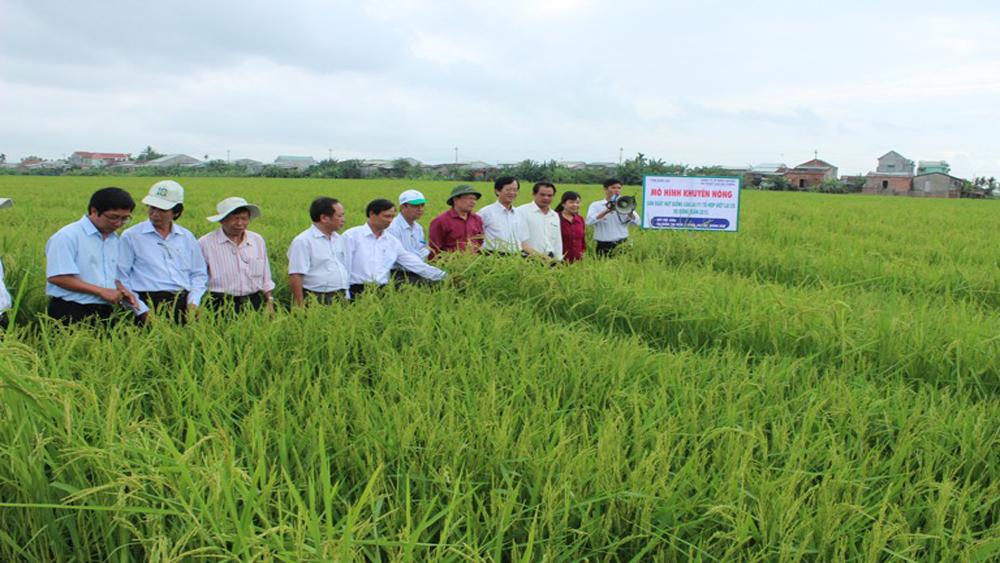 59% diện tích lúa sử dụng giống Việt Nam chọn tạo