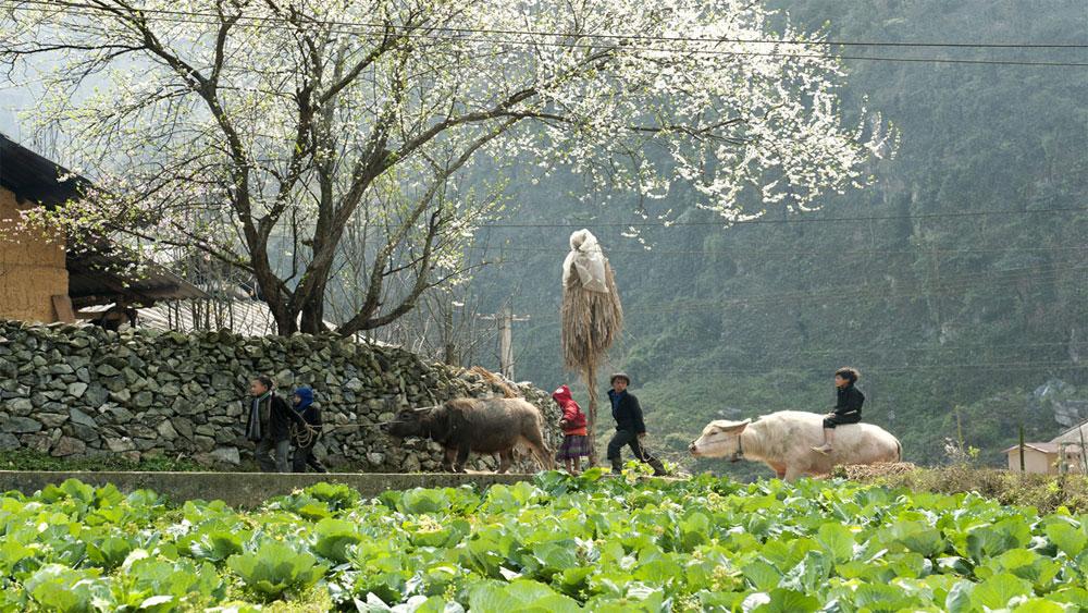 Hà Giang- nơi bốn mùa bạn đều có thể ghé thăm