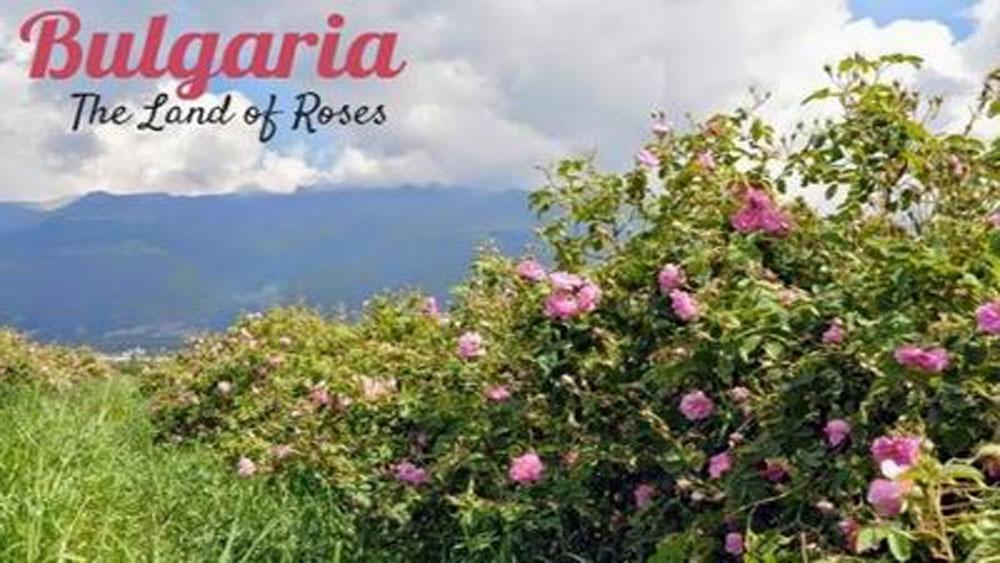 Ngày hội Hoa hồng Bulgaria, bạn bè, năm 2018